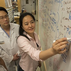 Hiroko Yano, PhD, right, led a team of researchers that learned how the fatal inherited disorder Huntington's disease kills brain cells. Co-author Albert...