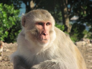 Benjamin Hayden and his group study decision making in Rhesus monkeys at