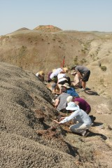 McGill field crew collecting fossils as part of a field course in Grasslands National
