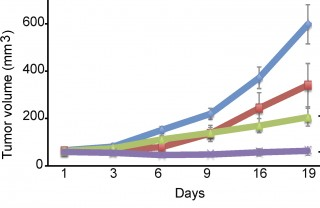 The data show that tumor growth halted in mice treated with a combination therapy (purple) using BCL2 (red) and CDK (green) inhibitors, in contrast to mice...