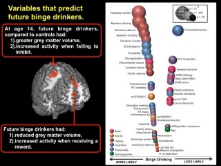 Variables that Predict Future Binge-Drinkers: This image depicts gray matter volume and relationship to binge-drinking on the left and predictors associated...