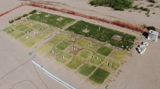 ReNUWIt turfgrass test plots at New Mexico State University. Cool-season tall fescue (top row) and warm-season grasses bottom half. Grasses irrigated with...