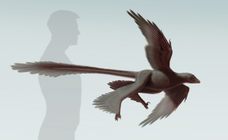 Life Reconstruction of Changyuraptor yangi, a 125 million-year-old microraptorine dinosaur from China.
