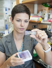 Audrey Odom, MD, PhD, looks at a microscope slide of malaria parasites. Odom and her colleagues have found one way the malaria parasite becomes resistant...