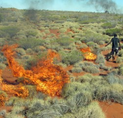 A member of the Martu Aboriginal community in western Australia sets fire to mature spinifex grass as a way to expose burrows occupied by sand monitor...