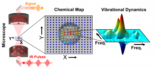 Newswise: Watching Chemistry in Motion: Chemical Environments Mapped Using Molecular Vibrations