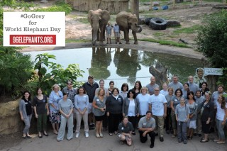 "Seneca Park Zoo staff in Rochester, New York take their ""Elphie"" for World Elephant Day"