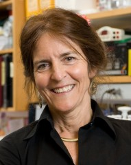 Jean Bennett, MD, PhD, director of CAROT and the F.M. Kirby Professor of Ophthalmology at the Perelman School of Medicine at the University of Pennsylvania