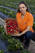 Cutline: Natalia Peres, UF/IFAS associate professor of plant pathology, shows a container of strawberries. A new UF/IFAS study shows growers can use the Strawberry...