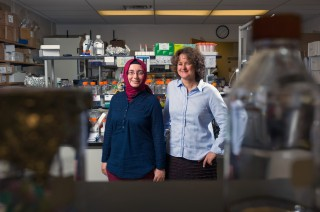 Georgia Tech graduate student Havva Keskin (left) and associate professor Francesca Storici are shown in a laboratory at the School of Biology. (Photo:...