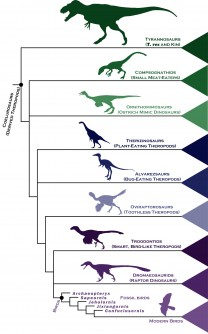 Newswise: Dinosaur Family Tree Gives Fresh Insight Into Rapid Rise of Birds