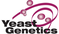 Newswise: Seven Researchers Awarded for Work Presented at Yeast Genetics Conference