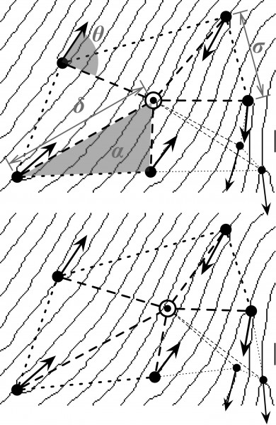 This drawing illustrates how fingerprint features are extracted and organized for statistical analysis. The black dots represent the features, the arrows represent their direction. The gray lines represent the friction ridges on the skin of the finger. The gray letters represent the name of the variables used to represent the features.
