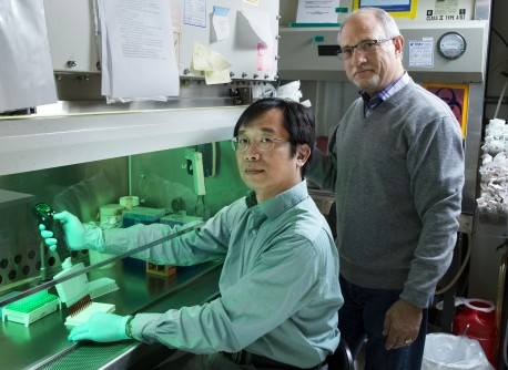 Newswise: Salk Scientists Unveil Powerful Method to Speed Cancer Drug Discovery