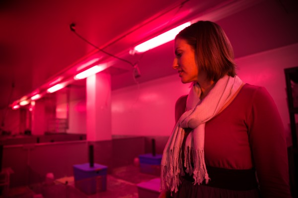 A University of Utah test detects hidden toxic effects by subjecting mice to competition for resources. Biologist Shannon M. Gaukler, lead study author, stands in front of the test enclosure, illuminated in red light that mice perceive as nightfall.
