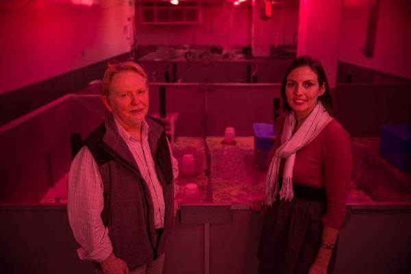 A University of Utah test detects hidden toxic effects by subjecting mice to competition for resources. Biology professor Wayne K. Potts and biologist Shannon M. Gaukler, who recently completed a doctoral degree at the U, stand in front of the test enclosure, illuminated in red light that mice perceive as nightfall.