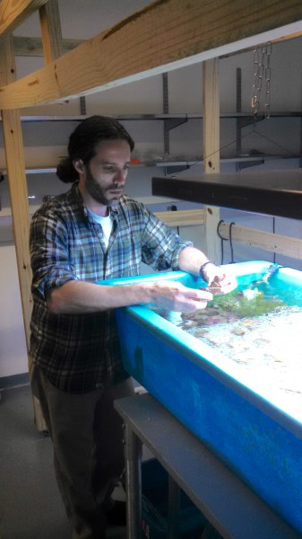 Dr. Cliff Ross, an associate professor of biology at the University of North Florida, focuses his current research at UNF on understanding the effects of climate change and environmental stressors on marine organisms, such as corals and sea grasses.