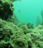 Newswise: Pioneer Study Examines Declining Coral Reef Health Due to Pesticides/Sea Surface Temperatures
