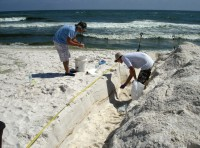 Newswise: Study Details Impact of Deepwater Horizon Oil on Beach Microbial Communities