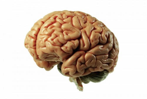 Newswise: How Concussions Affect the Brain