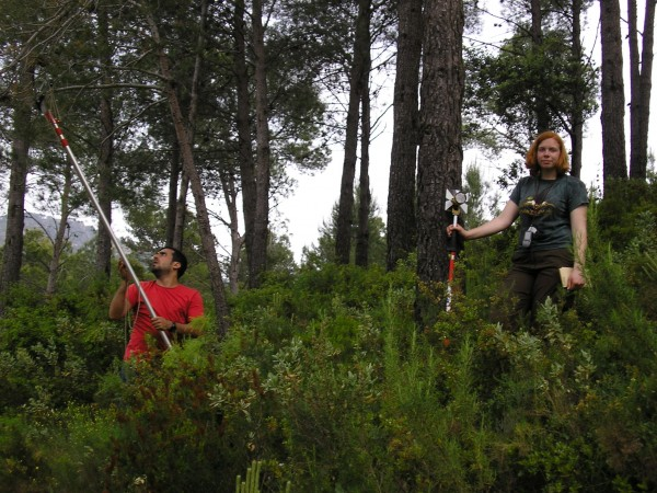 Visiting student Yusuf Kurt and PhD student Katharina Budde (now postdocs at North Caroline State University and University of Copenhagen, respectively) collecting cones from a natural maritime pine population. This is the first step to establishing selection experiments aimed at connecting genomic information with fitness in maritime pine.