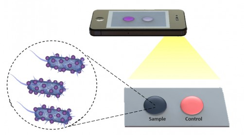 Newswise: New Biosensing Platform Could Quickly and Accurately Diagnose Disease and Monitor Treatment Remotely
