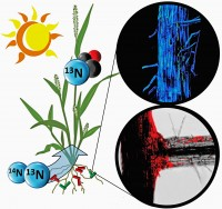 Bacteria Tracked Feeding Nitrogen to Nutrient-Starved Plants