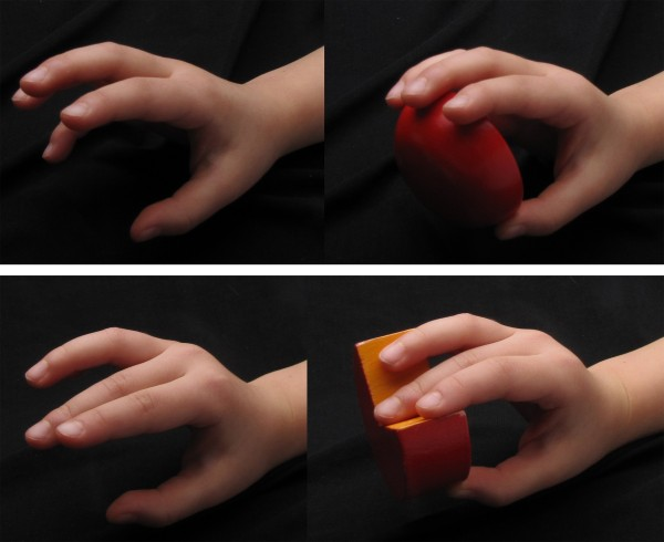 To perceive objects we touch, our brains must integrate tactile information with an awareness of the position of our fingers.