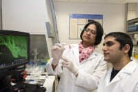 Newswise: Plant-Derived Compound Targets Cancer Stem Cells