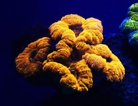 Newswise: Rainbow of Glowing Corals Discovered in Depths of the Red Sea