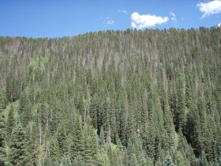 Newswise: Drought's Lasting Impact on Forests
