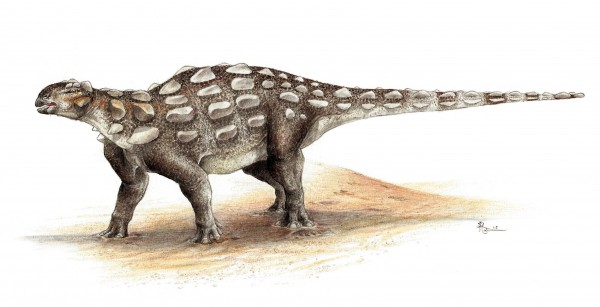 Life illustration of <i>Gobisaurus</i>, an ankylosaur with a stiff tail but no knob of bone at the end.