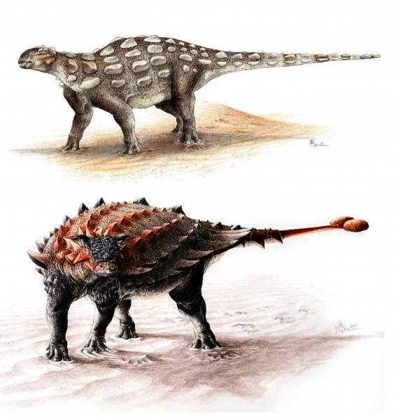 <i>Gobisaurus</i> compared with <i>Ziapelta</i>, an ankylosaur with a fully developed tail club.