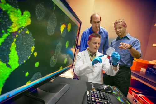 Newswise: Research Team Creates Model to Predict Cellular Evolution