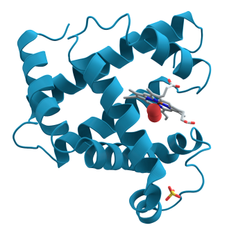 3-D rendering of myoglobin.