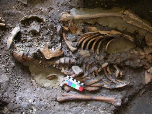 Newswise: A Fourth Strand of European Ancestry Discovered