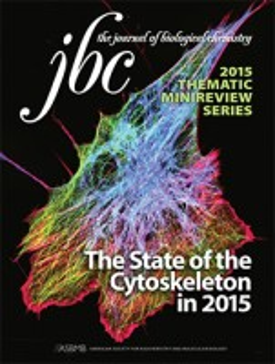 JournalNews_pic_-_JBC_Cytoskeleton.jpg