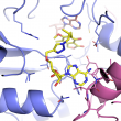 Study Reveals Structure of Tuberculosis Enzyme, Could Offer Drug Target