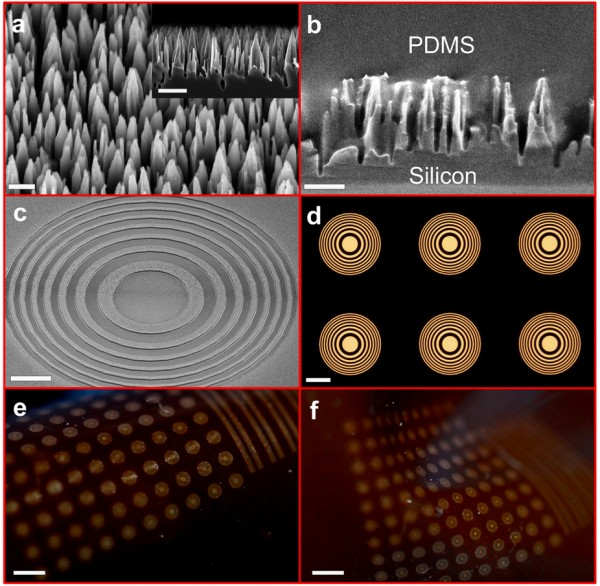 Tiny silicon nano-wire towers make up dark regions of the flexible Fresnel zone lenses. Each individual lens resembles a bull's-eye of alternating light and dark. Arrays of lenses formed within a flexible polymer bend and stretch into different configurations.