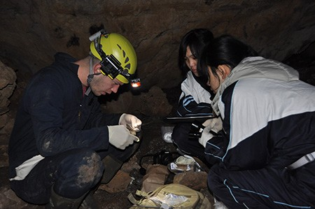 Newswise: Bat Disease Fungus Found to Be Widespread in Northeast China