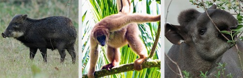 Newswise: Loss of Large Tree-Dwelling Animals Could Accelerate Climate Change
