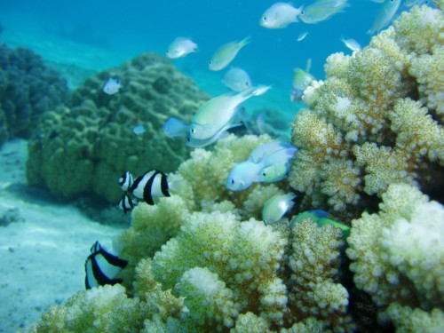 Newswise: Corals Respond to Changing Ocean Conditions by Altering Regulation of the DNA Message
