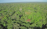 Synchronized Leaf Aging in the Amazon Responsible for Seasonal Increases in Photosynthesis