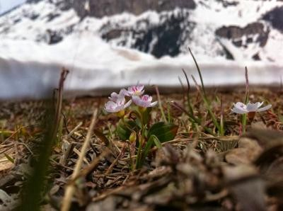 Newswise: Climate Change's Frost Harms Early Plant Reproduction