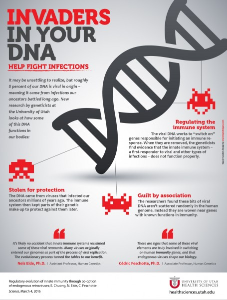 Invaders in your DNA help fight infections