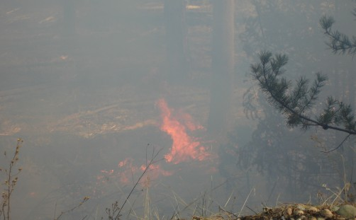Newswise: Wildland Communities Must Learn to Live with Fire
