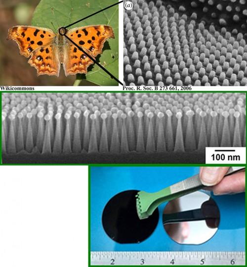 Artificial Moth