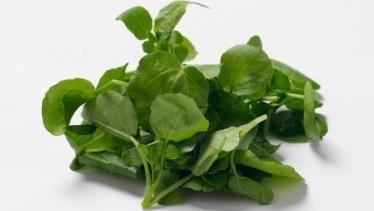 Newswise: Watercress Extract Detoxifies Carcinogens in Smokers, Clinical Trial Demonstrates
