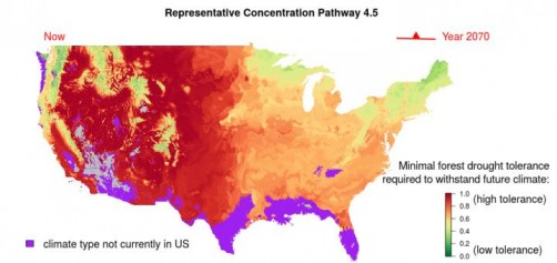 Newswise: Model Predicts How Forests Will Respond to Climate Change