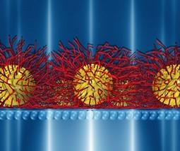 Janus-Like Nanoparticle